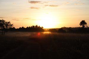 Landscape 0695