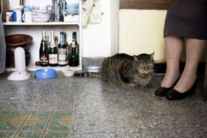 les-vieux-chats_p8
